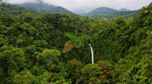 Beautiful Eco project, Virgin 170 hectares San Marcos de Tarrazu, Costa Rica