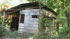 little-tico-house2