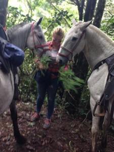 horse costa rica